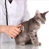 Ветеринарные клиники в Первомайске